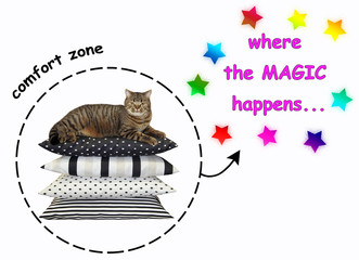 The cat lies on pile of pillows in the comfort zone. Where the magic happens. White background.