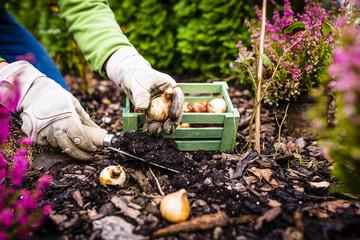Foto op Plexiglas Tuin Autumn planting bulbs of flowers in the garden.