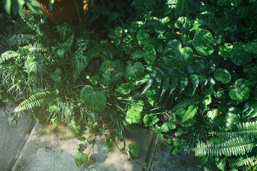 Different tropical plants in botanical garden