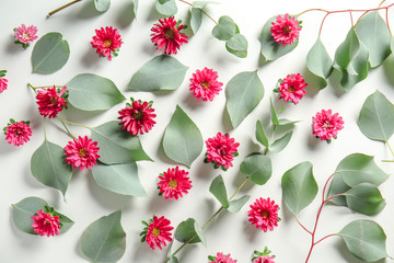 Green eucalyptus leaves and chrysanthemum flowers on white background