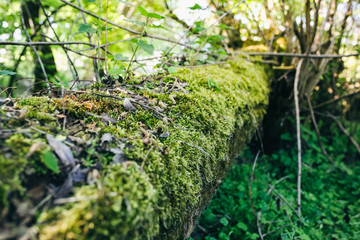 Green moss growing on the tree trunk. Natural wood photo. Forest in summer.