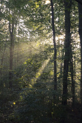 Sunbeams fall through the branches of a tree