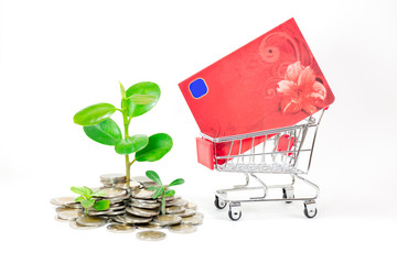 Young plant growing in pile of coins and book bank in shopping cart on white background. Business financial growth, savings, investment and interest concept.