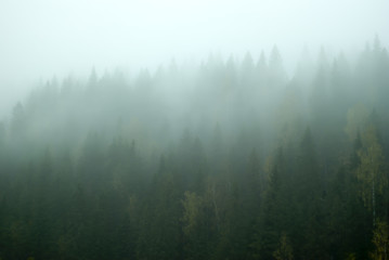 Blurred landscape - gloomy mountain forest covered with fog