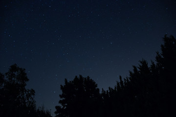 Starry blue night sky behind the silhouette of the pines