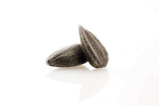 Sunflower seeds close-up