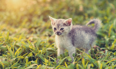 Small cat in the grass