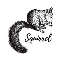 Hand drawn squirrel. Retro realistic animal isolated. Vintage style. Doodle line graphic design. Black and white drawing mammal. Vector sketch. Christmas animal