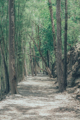 Forest path way landscape use for background., vintage style., Way to moutain.