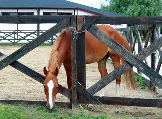 Beautiful brown horse eating grass in his stable on on a background of summer landscape