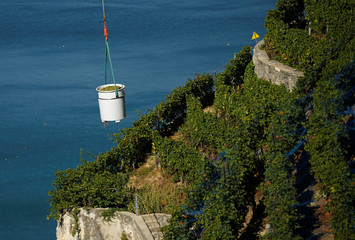 A bucket full of grapes is lifted by an helicopter during the harvest in the UNESCO listed Lavaux vineyards in Puidoux