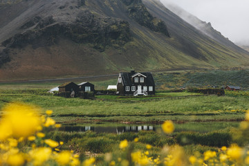 beautiful house on green hill in Iceland with yellow field flowers on foreground