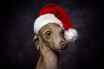 Dog with a Santa Claus hat
