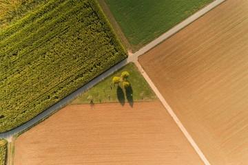 Luftbild mit der Drohne über Maisfeldern im Sommer Fotoväggar