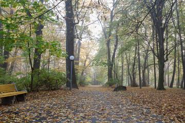 Old city park in autumn. Forest. Fog. Landscape.