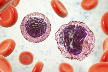 Lymphocyte and monocyte surrounded by red blood cells
