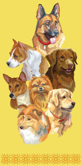 Postcard with dogs of different breeds-7