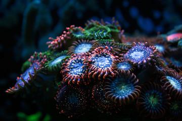 blur red and blue round button corals background