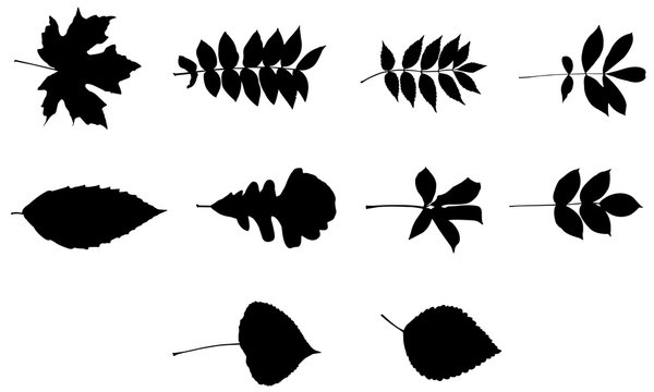 Leaf svg files cricut, leaves silhouette clip art, foliage Vector illustration eps, Black  overlay