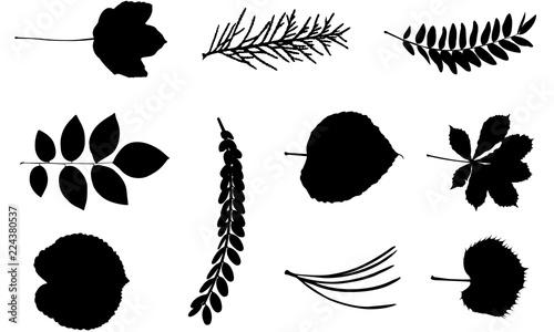 Leaf svg files cricut, leaves silhouette clip art, foliage