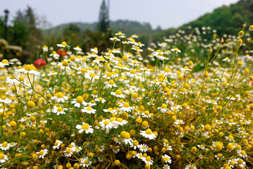 Beautiful flowers in the garden /Nature always creates beautiful things./yellow flower/view
