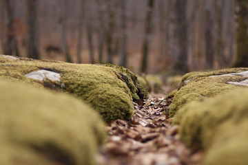 Mossy stones and fallen autumn leaves in the mountain