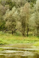 trees and lush vegetation on shore of oxbow lake of Ticino river  near Bernate, Italy