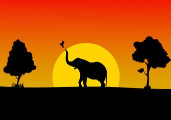 African savanna an evening landscape
