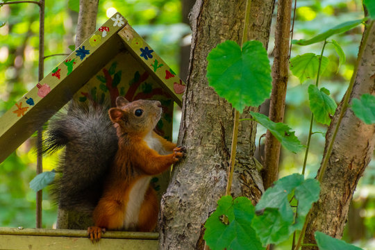 A squirrel in bird's house