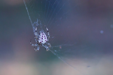A spider web in nature background. spiderweb or cobweb is a device created by a spider out of proteinaceous spider silk extruded from its spinnerets. generally meant to catch its prey