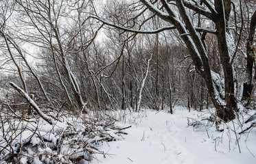 Road in the winter forest. Snowy trees in the park_