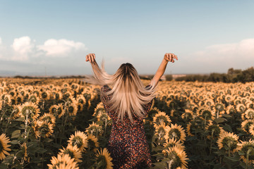 Rear view of young blonde woman touching her hair in the middle of countryside of sunflowers in a sunset