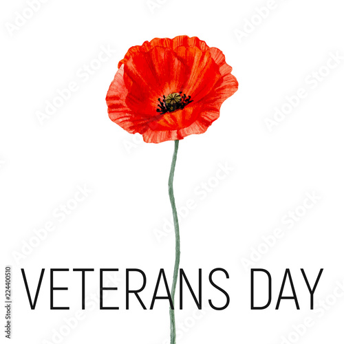 Veterans Day Card With Poppy Flower Watercolor Poppy Vector