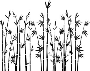 Bambus Silhouette