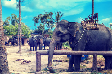 Trip on elephants in the jungle of Samui, Thailand