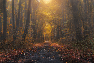 Mysterious forest at the evening after rain. Picturesque autumn landscape.