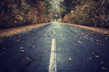Autumn leaves on rainy road