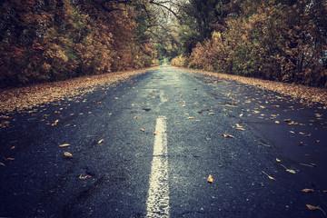 Autumn leaves on rainy road
