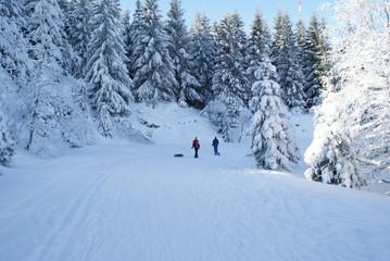 Schlitten Fahren im Harz Winter