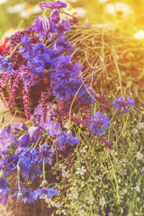 Beautiful summer background with blue flowers. Sunlight, sunset.