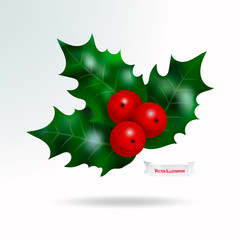 Vector realistic plant holly or mistletoe, single branch with red berries and green leaves. Christmas and New Year holiday celebration symbol. Isolated illustration on white background