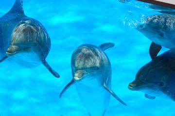 Close up of dolphins underwater