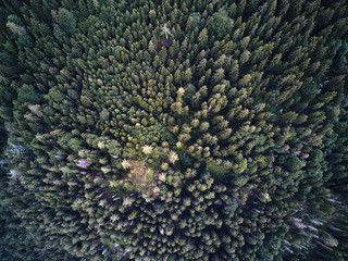 trees from above, aerial view flying with drone