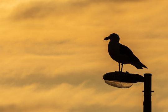 Seagull on lightpost