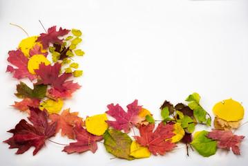 Printed kitchen splashbacks Beige Autumn Leaves