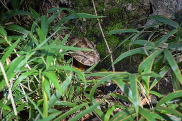 Puffotter, Schlange, Giftig, Sonnen Kenya