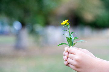 The child picked a flower and wants to give it. A flower in the hands of children.