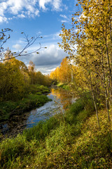 Daytime natural scenery by the forest river