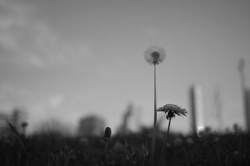 capullo y flor