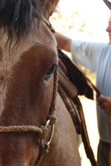 Close de cavalo sendo encilhado